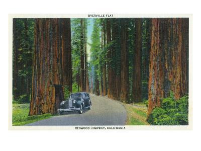 California - Dyerville Flat Scene on the Redwood Highway