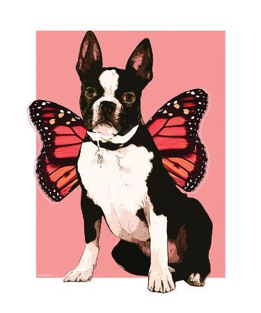 Fairy Boston Terrier