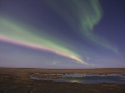 Aurora Borealis, Arctic National Wildlife Refuge, Alaska, USA