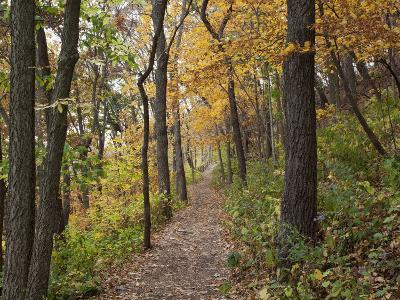 Trail to Great Bear and Little Bear Mound, Effigy Mounds National Monument, Iowa, USA
