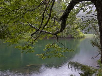Lago Chico, Huerquehue National Park, Chile
