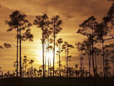 Everglades National Park, UNESCO World Heritage Site, Florida, USA, North America