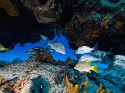 Fish, Cozumel, Mexico, Caribbean, North America
