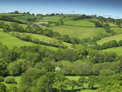 Fields Near Cadleigh, Mid Devon, Devon, England, United Kingdom, Europe