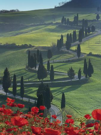 Winding Road and Poppies, Montichiello, Tuscany, Italy, Europe
