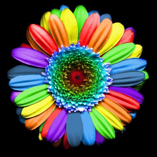Rainbow Flower' Photographic Print - Magda Indigo | AllPosters.com