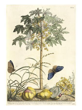 1. Papaya, 2. Ana gallis, 3. Gramen