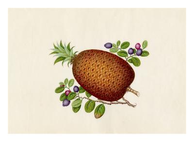 Ananas comosus, Vaccinium myrtillus