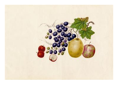 Vitis vinifera, Malus prunifolia, Pyrus communis, Sorbus megalocarpa