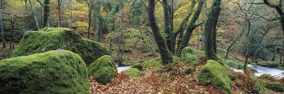 River Flowing Through a Forest, River Plym, Dartmoor, Devon, England