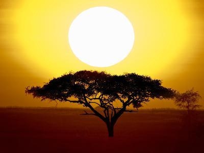 Silhouette of a Tree at Sunrise, Tanzania