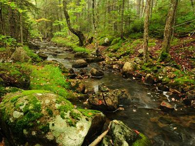 Scenic View of a Rocky Stream and Forest