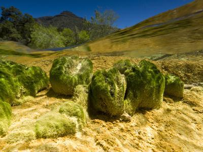 Algae Growth in the Alkaline Fossil Creek