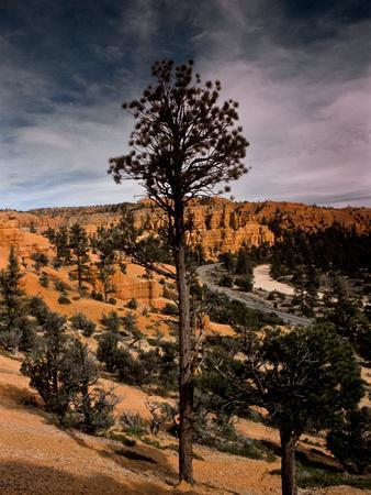 A Arid Valley in the Region of Bryce Canyon