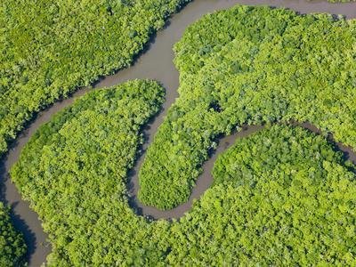 Aerial View of Rain Forest, Daintree River, Daintree National Park, Queensland Australia