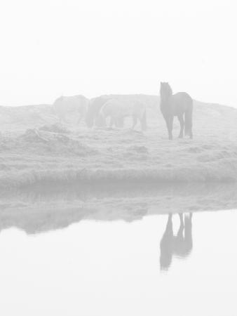 Herd of Horses in the Mist, Iceland