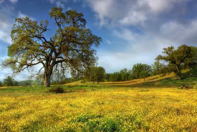 Spring at Shell Creek