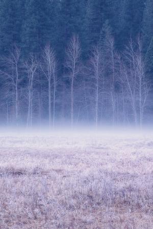 Frosty Morning Meadow, Yosemite