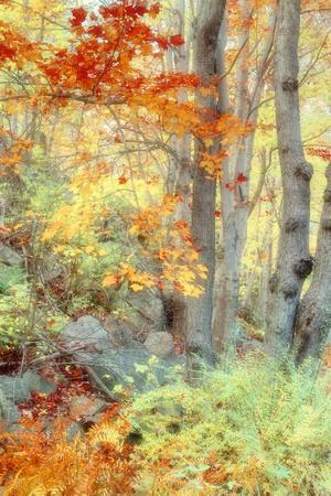 New England Fall Color Impressions