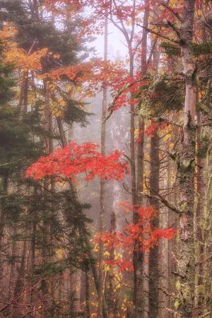 Fall Color and Mist