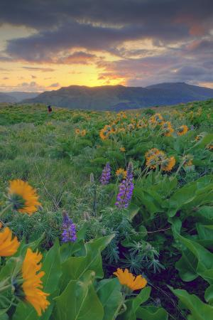 Across the Flower Field at Sunrise, Rowena Plateau