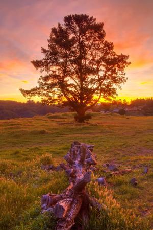 Sunrise at Oakland Hills