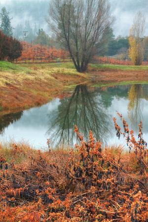 Misty Autumn Morning at Calistoga Pond