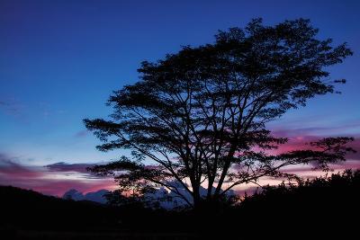 Daybreak Tree