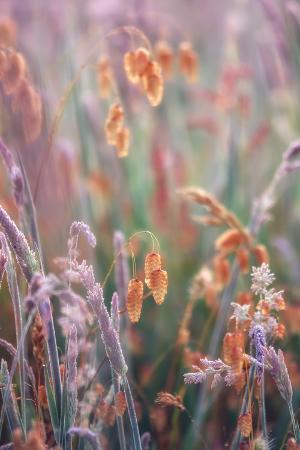 Coast Wildflower Array
