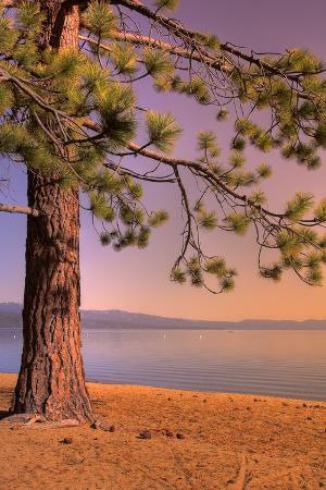 Morning Tree, South Lake Tahoe