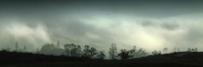Central Valley Fog Landscape
