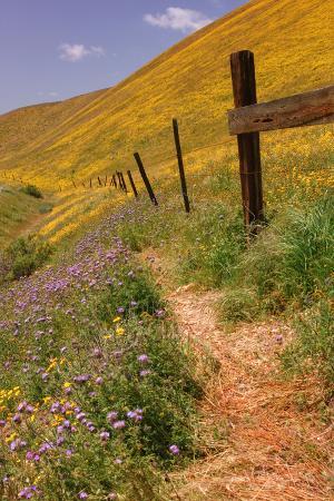 Central Valley Spring Roadside Scene