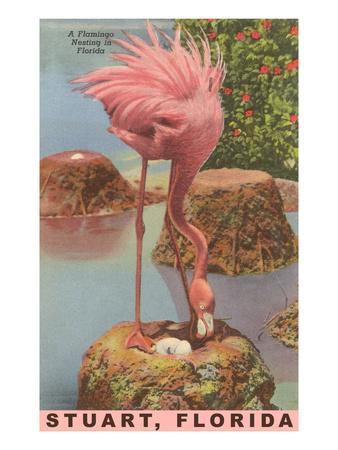 Flamingo Nesting in Stuart, Florida