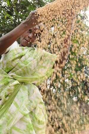Sieving Grains in Rural India, Trissur, Tamil Nadu, India, Asia