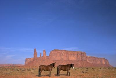 Two Navajo Horses, Monument Valley Navajo Tribal Park, Utah, United States of America