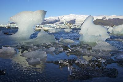 Icebergs on Glacial Lake at Jokulsarlon with Snow on Massive Icecap of Vatnajokull Behind, Iceland