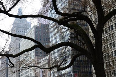 Buildings on Michigan Avenue Through a Leafless Tree in Early Spring