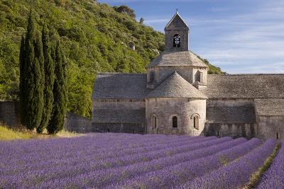 Rows of Lavender, Abbaye De Senanque, Gordes, Luberon, Provence, France