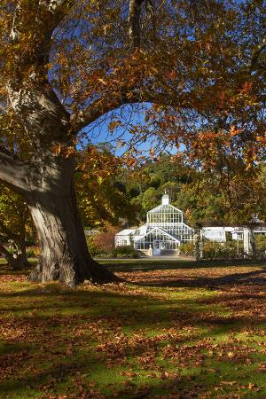 Autumn Colour, Botanic Gardens, Dunedin, Otago, South Island, New Zealand