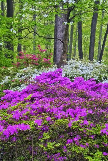 Winterthur Gardens, Delaware, USA Photographic Print at ...