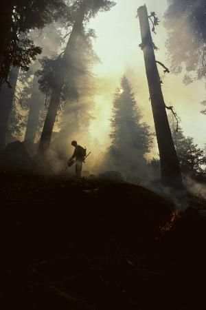 Forest Fire, Sequoia and Kings Canyon National Park, California, USA
