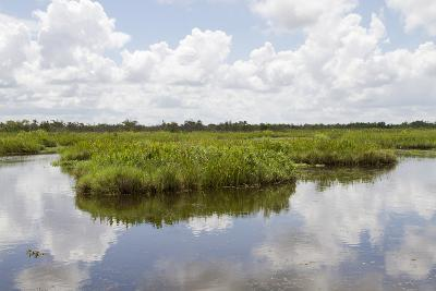 Airboat Swamp Tour, Lafitte, Louisiana