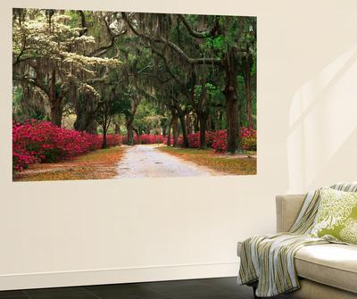 Road Lined with Azaleas and Live Oaks, Spanish Moss, Savannah, Georgia, USA
