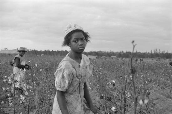 African American Girl Picking Cotton In Arkansas Oct