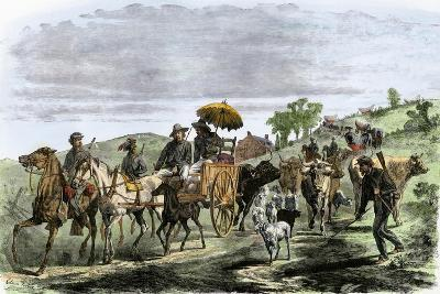 General Early's Cavalry Taking Livestock from Farmers During Confederate Invasion, Maryland, 1864