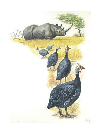 Helmeted Guineafowls Numida Meleagris in Savannah, Illustration