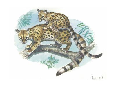 Cape Genet Genetta Tigrina with Young on Back, Illustration