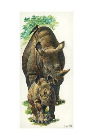 White Rhinoceros Ceratotherium Simum with a Young, Illustration