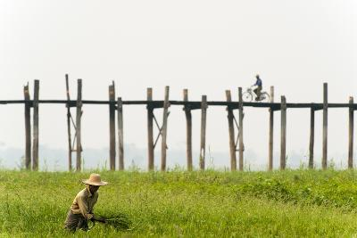 A Man Collects Grass in Front of the U Bein Bridge in Burma