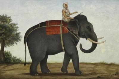 An Elephant Keeper Riding His Elephant